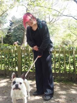 Fun dog walking, French Bulldog