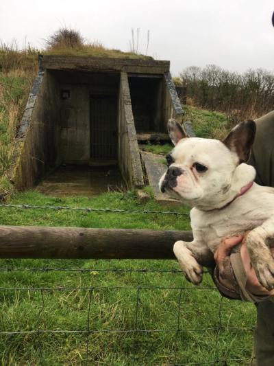 Millie the French Bulldog outdoors in the countryside with her owners