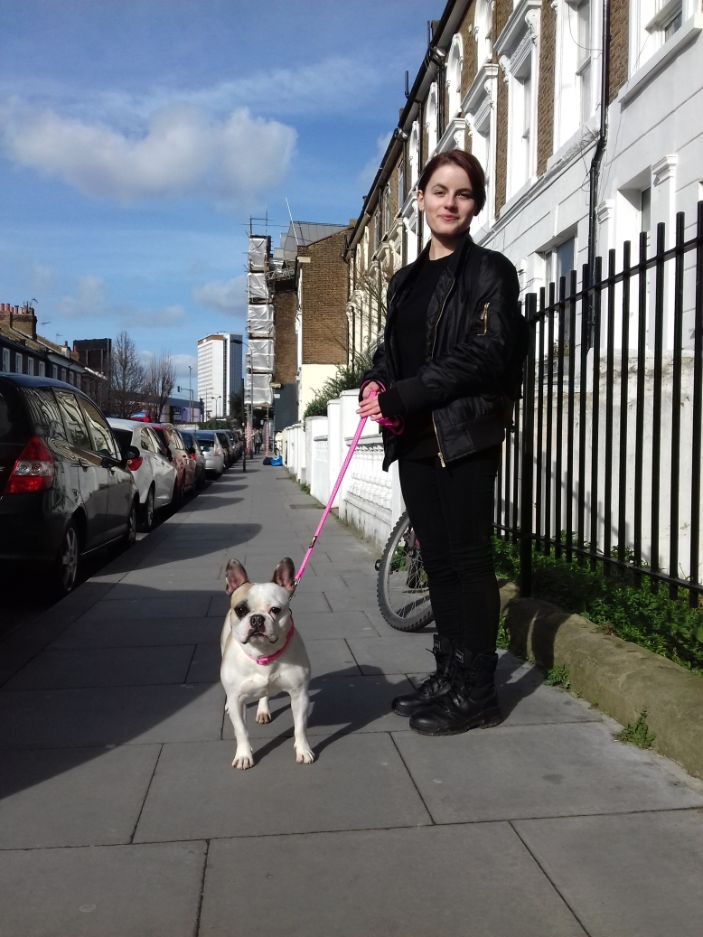 Millie the French Bulldog out and about