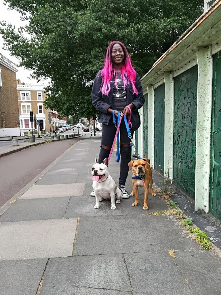 Millie, the French Bulldog, and Ziggy, theCross Pug/Cocker Spaniel/French Bulldog/Boston Terrier, enjoying fresh air