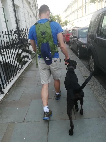 Duke, the German Shorthaired Pointer (GSP), enjoying his dog Training