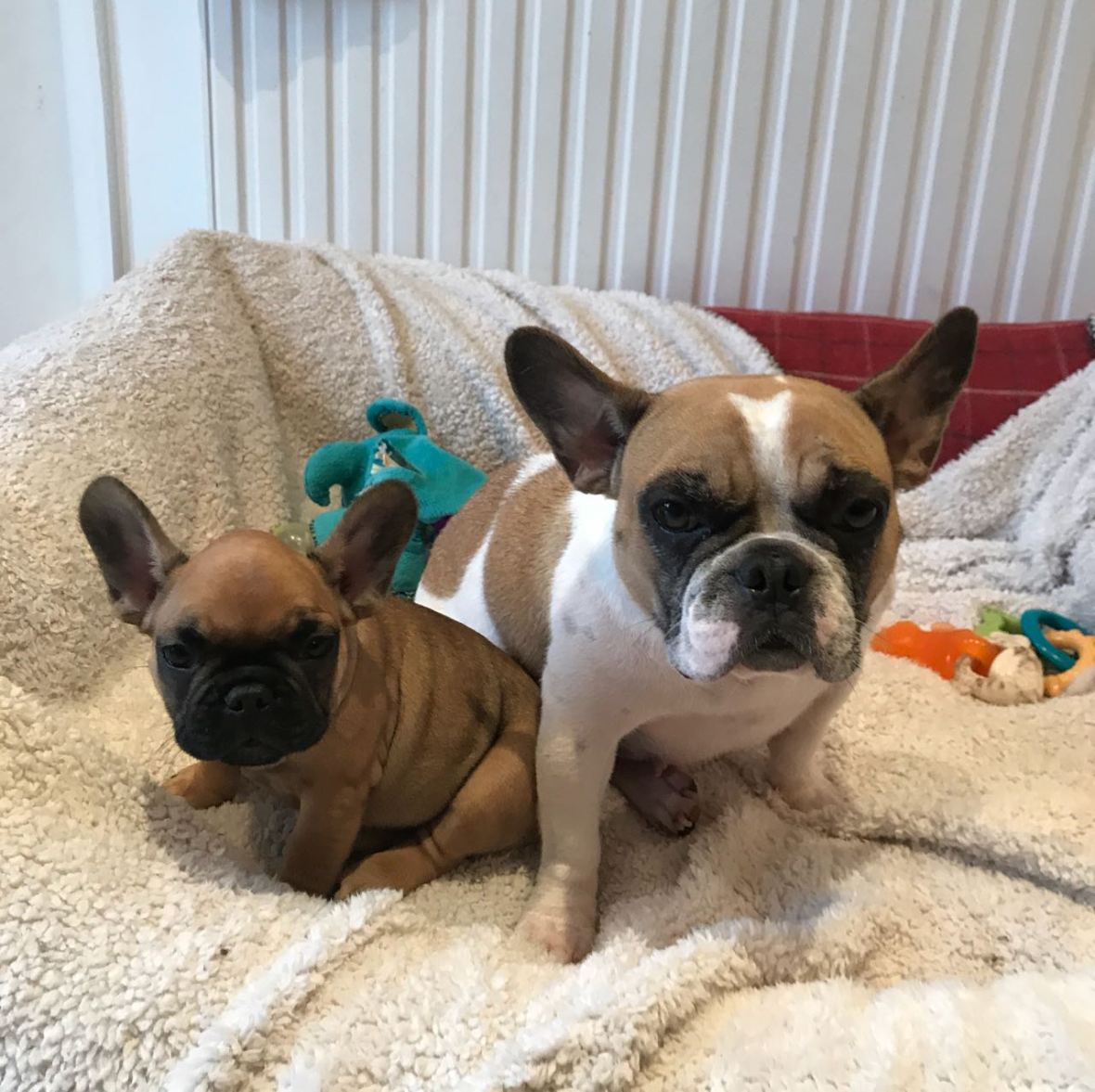 Bonnie, the French Bulldog, and her mum!