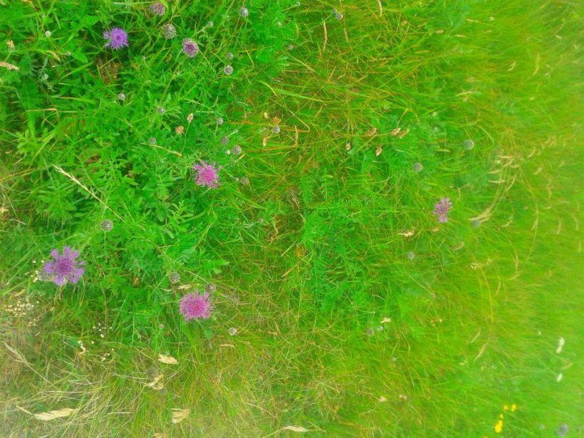 Bright grass